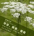 平淡、朴素、善良:珍惜平淡生活,热爱朴素生活,内心多些善良