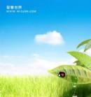 请放开你的视野和想像,去享受蓝天白云、绿树青草