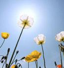 生活也许有不如意,但心态必须是阳光的