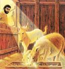 嫉妒驴子的山羊:嫉妒是一支利剑,终将害自己