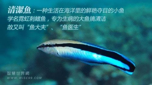 清洁鱼的生存智慧:帮助他人
