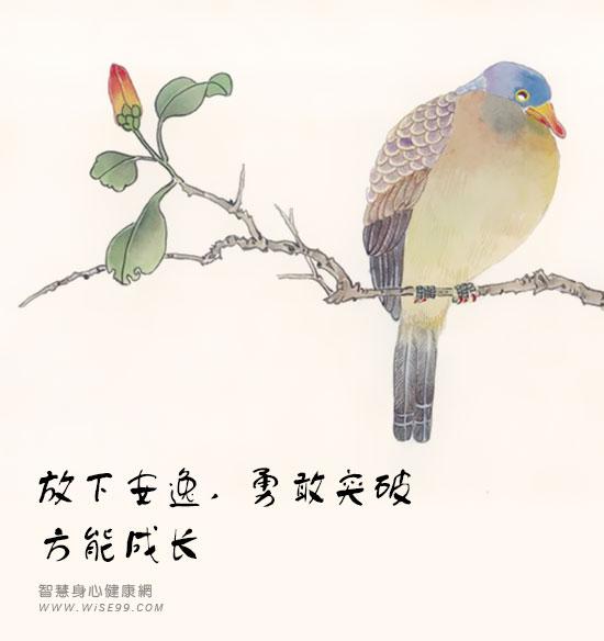 不飞的鸟 放下安逸,勇敢突破,方能成长
