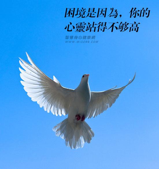 鸽子与老鹰:困境是因为,你的心灵站得不够高