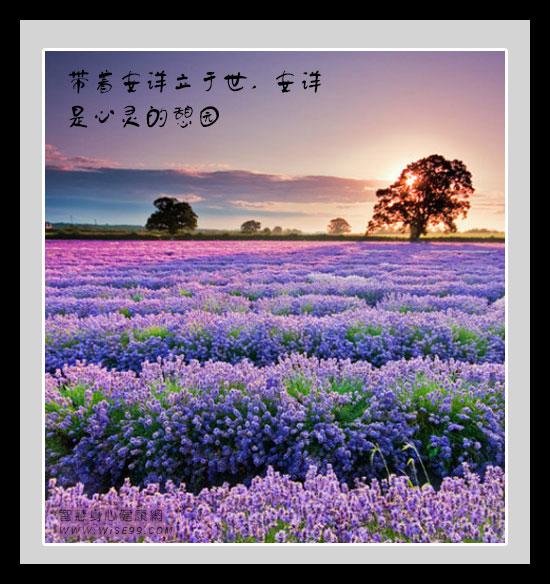 带着安详立于世,安详是心灵的憩园