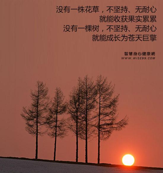 没有一株花草,不坚持、无耐心,就能收获果实累累;没有一棵树,不坚持、无耐心,就能成长为苍天巨擎