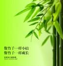 像竹子一样小结,像竹子一样成长