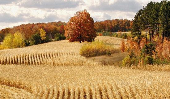秋季,天地之间,所有的生命都呈现一种规律:生长放缓,活力减低
