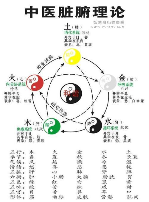 中医,将我们的人体,从身心层面,分为主要的五大系统:心,肝,脾,肺,肾