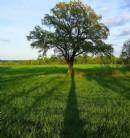 勿伤害他人,做一个心如树,宽容的人