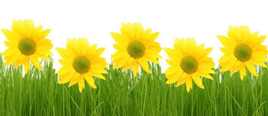 互相协助,共同成长――小草的功课