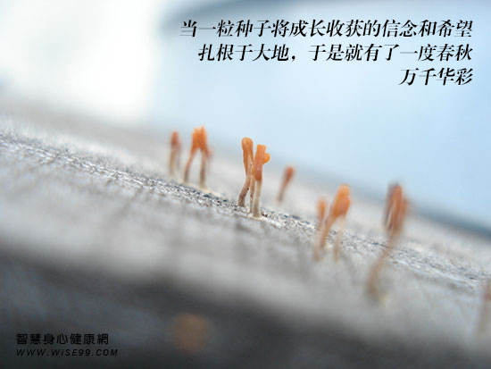 当一粒种子将成长收获的信念和希望,扎根于大地,于是,就有了一度春秋,万千华彩
